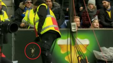 В игрока «Копенгагена» во время матча бросили дохлую крысу