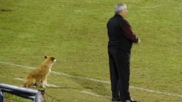 Собака работает помощником тренера в парагвайском клубе