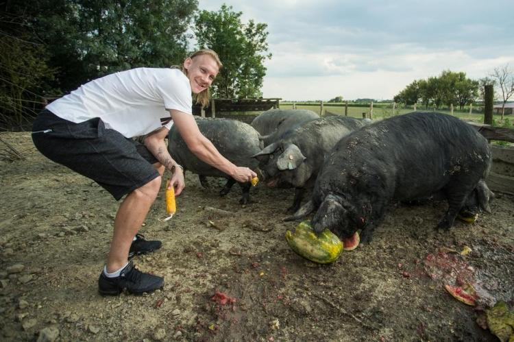 Вида откроет свиноферму для выращивания черных свиней. Фото